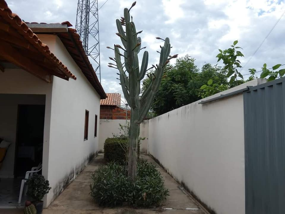 Ibitiara-Bahia-omgeving--(18)
