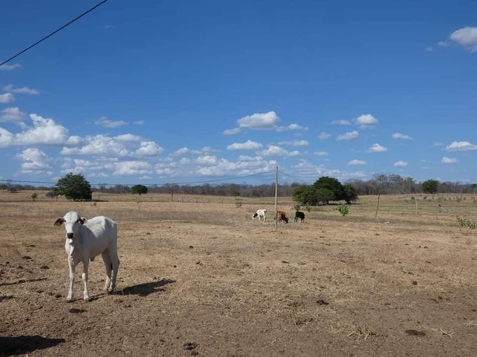 Ibitiara-Bahia-omgeving--(21)