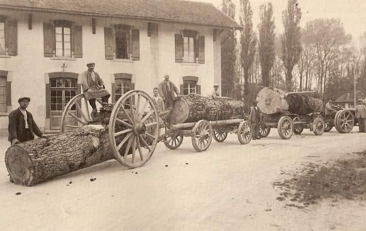 Hout-transport--(2)