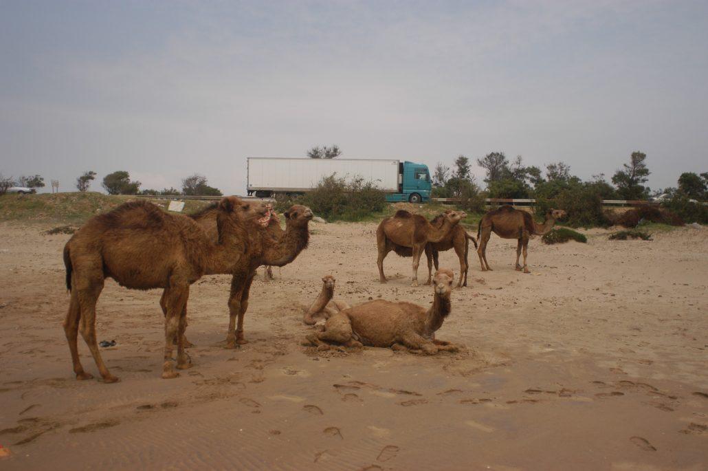 2003--Zwischen-Tanger-und-Rabat