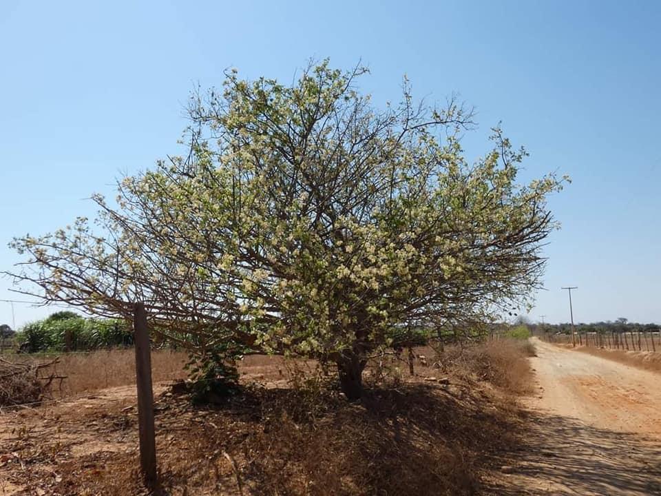Ibitiara-Bahia-omgeving--(34)