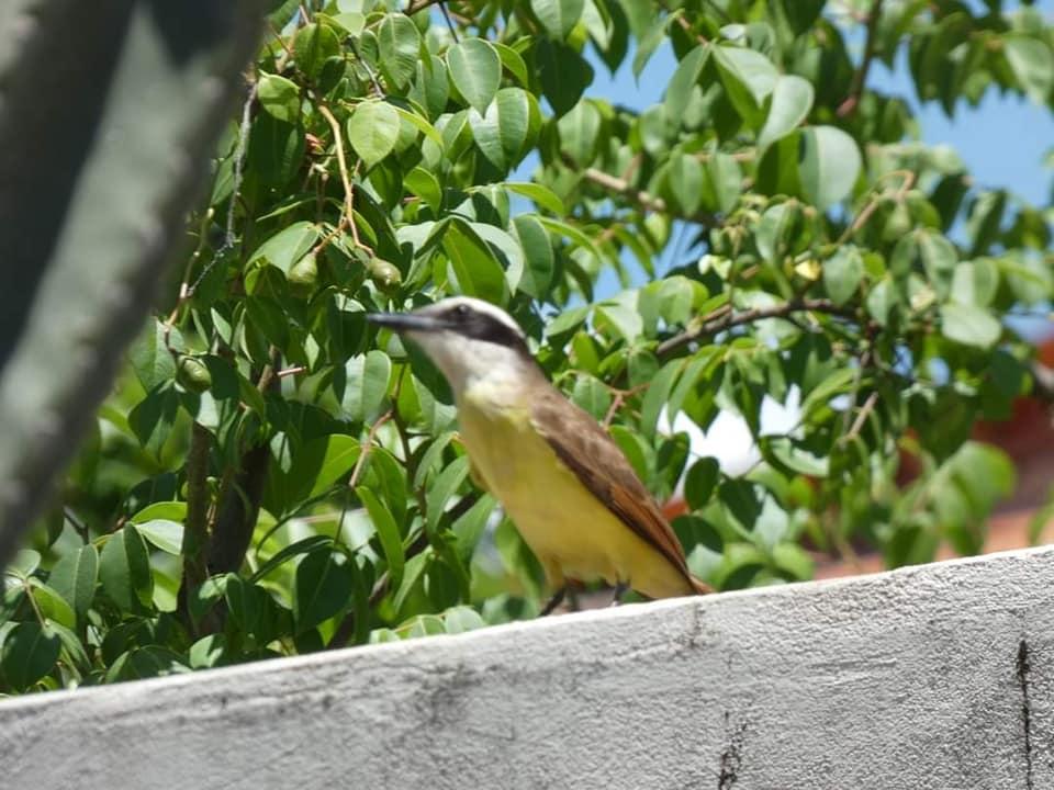 Ibitiara-Bahia-omgeving--(50)