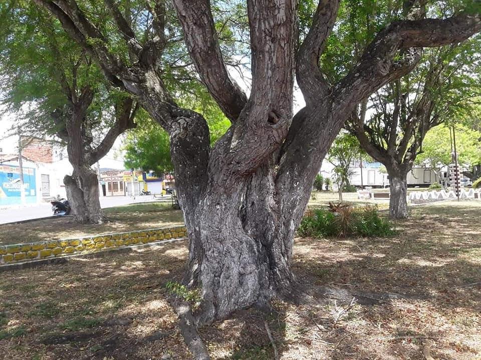 Ibitiara-Bahia-omgeving--(53)